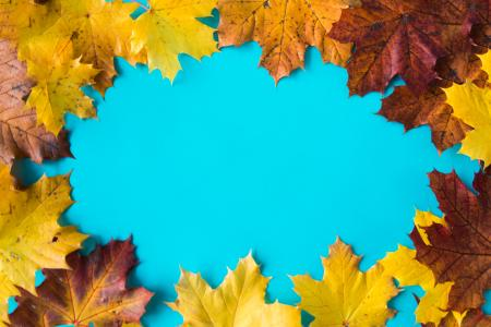 Hero Image Autumn Leaves on Flat Blue Background #2